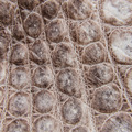Nature Crocodile Skin Texture Background. - PhotoDune Item for Sale