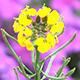 Flower & Bee