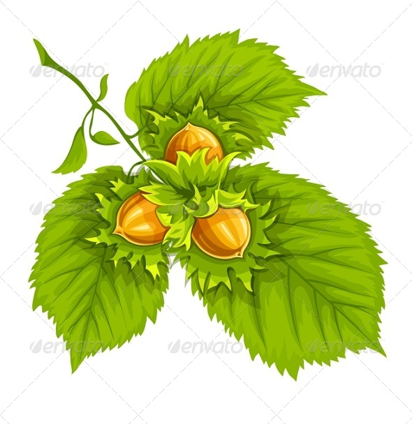 GraphicRiver Hazelnuts on Green Leaves 7687974