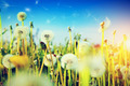 Spring field with flowers, dandelions in fresh grass. Sun on blue sky - PhotoDune Item for Sale