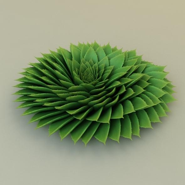 3DOcean Aloe Rounded 7694649