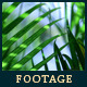 Green Leafs 18 - VideoHive Item for Sale