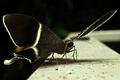Jungle Moth - PhotoDune Item for Sale
