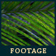 Green Leafs 17 - VideoHive Item for Sale