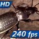 Large Beetle - VideoHive Item for Sale