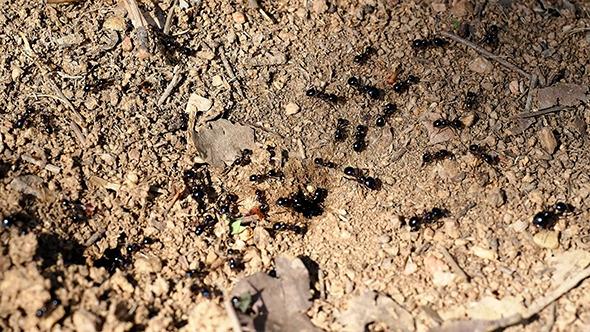 Ants Macro 1
