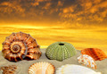 Conch shell on beach - PhotoDune Item for Sale