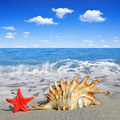 Conch shell with starfish - PhotoDune Item for Sale