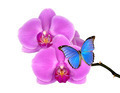 purple orchid with butterfly  - PhotoDune Item for Sale