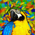 Gold and Blue Macaw Fantasy - PhotoDune Item for Sale