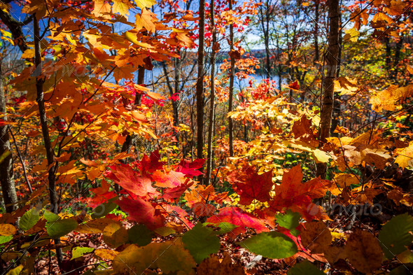 Autumn splendor - Stock Photo - Images