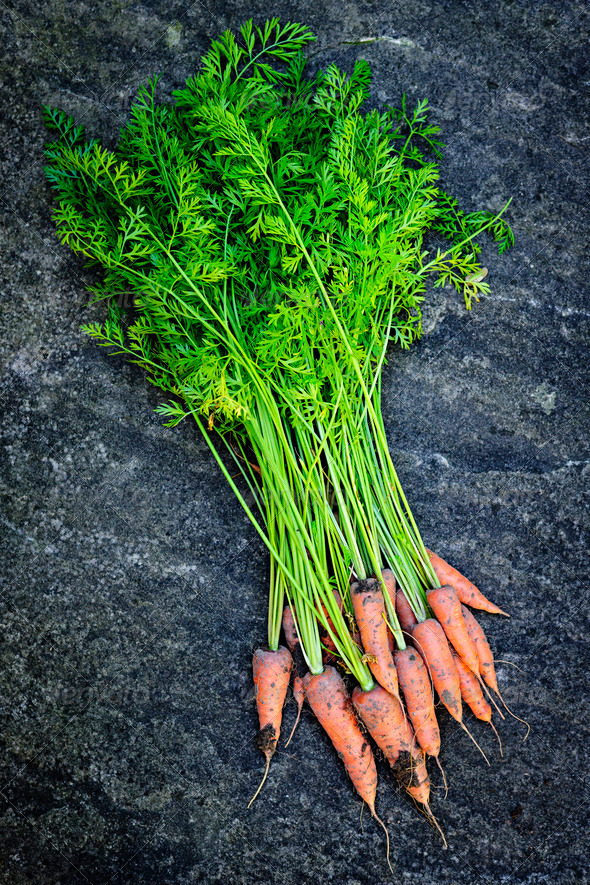 Bunch of carrots fresh from garden - Stock Photo - Images