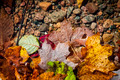 Fall leaves in water - PhotoDune Item for Sale