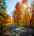 Fall forest road - PhotoDune Item for Sale