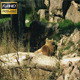 Bear In The Zoo - VideoHive Item for Sale