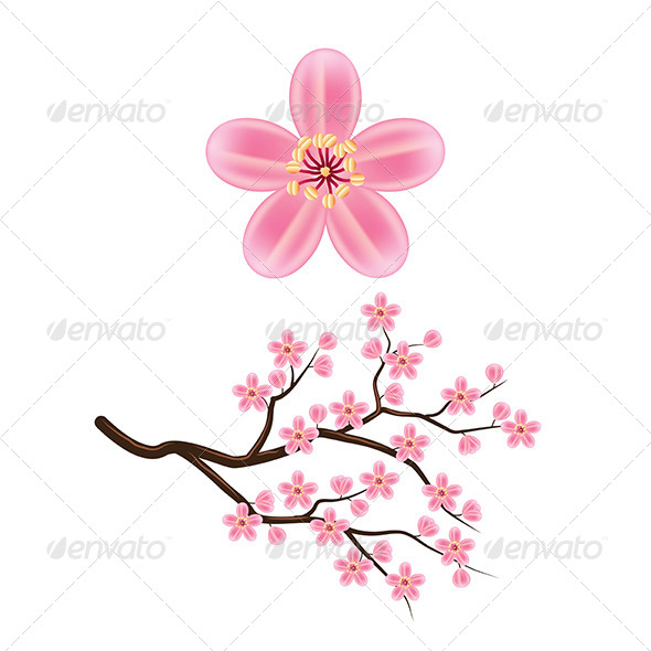 GraphicRiver Blooming Cherry Branch 7733910