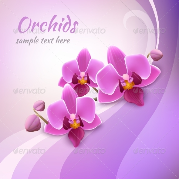 GraphicRiver Orchid Background Template 7734038