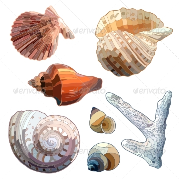 GraphicRiver Set of Sea Shells And Coral 7734345