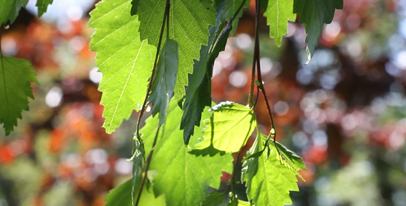 Leaves 28