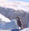 sparrow - PhotoDune Item for Sale