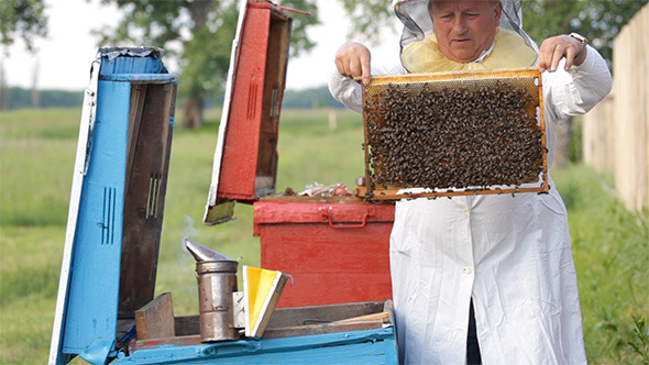 Beekeeper with Honeycombs