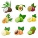 Exotic Fruits - GraphicRiver Item for Sale