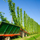 Harvester on a Hop Field - PhotoDune Item for Sale