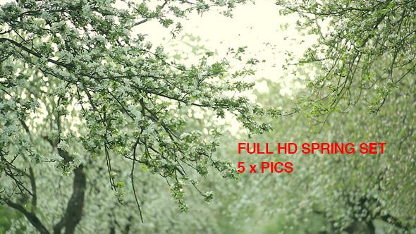 Spring Apple Tree Flowers