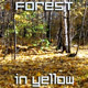Forest in Autumn Season - VideoHive Item for Sale