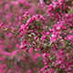 Blooming Trees in Orchard 02 - VideoHive Item for Sale