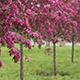 Spring Orchard 02 - VideoHive Item for Sale