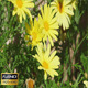 Yellow Flowers And Spider - VideoHive Item for Sale