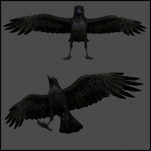 Crow (Bird) - Rigged - 3DOcean Item for Sale