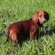 Dog Hunt 2 - VideoHive Item for Sale