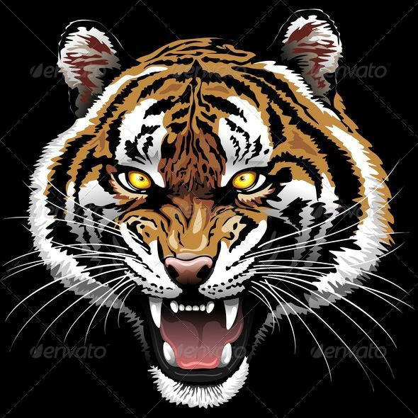 Tiger roar vector - photo#7