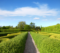 Lush green Topiary in a Tranquil Garden - PhotoDune Item for Sale