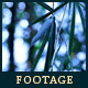 Green Leafs 19 - VideoHive Item for Sale