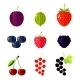 Berries Flat vector illustration - GraphicRiver Item for Sale