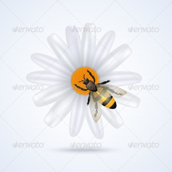 GraphicRiver Bee with Flower 7785473