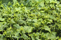 Rapidly growing cucumber seedlings - PhotoDune Item for Sale