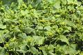 Rapidly growing cucumber seedlings - PhotoDune Item for Sale