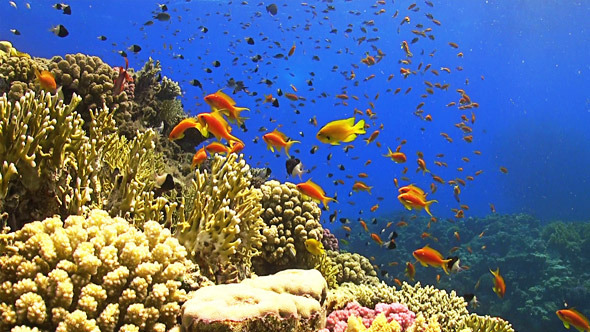 Colorful Fish on Vibrant Coral Reef 651