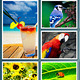 Square Photo Frame Collage - GraphicRiver Item for Sale