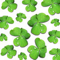 Shamrocks Group with Dew Drops on White - PhotoDune Item for Sale