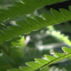 Fern In Forest - 10 - VideoHive Item for Sale