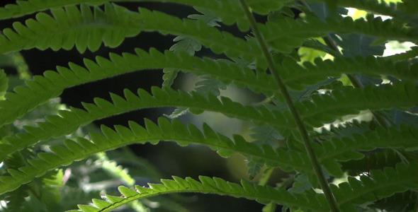 Fern In Forest 10
