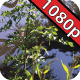 Jurassic Gardens: Tropical Swamp - VideoHive Item for Sale