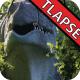 Jurassic Gardens: Tyrannosaurus Rex - VideoHive Item for Sale