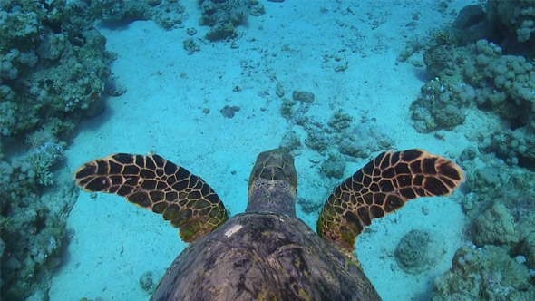 VideoHive Turtle Swimming Over Coral Reef 700 7821200
