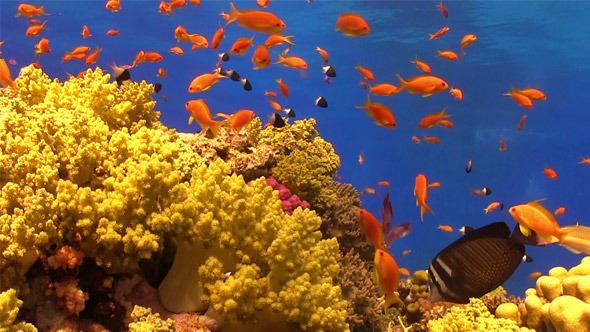 Colorful Fish on Vibrant Coral Reef 707